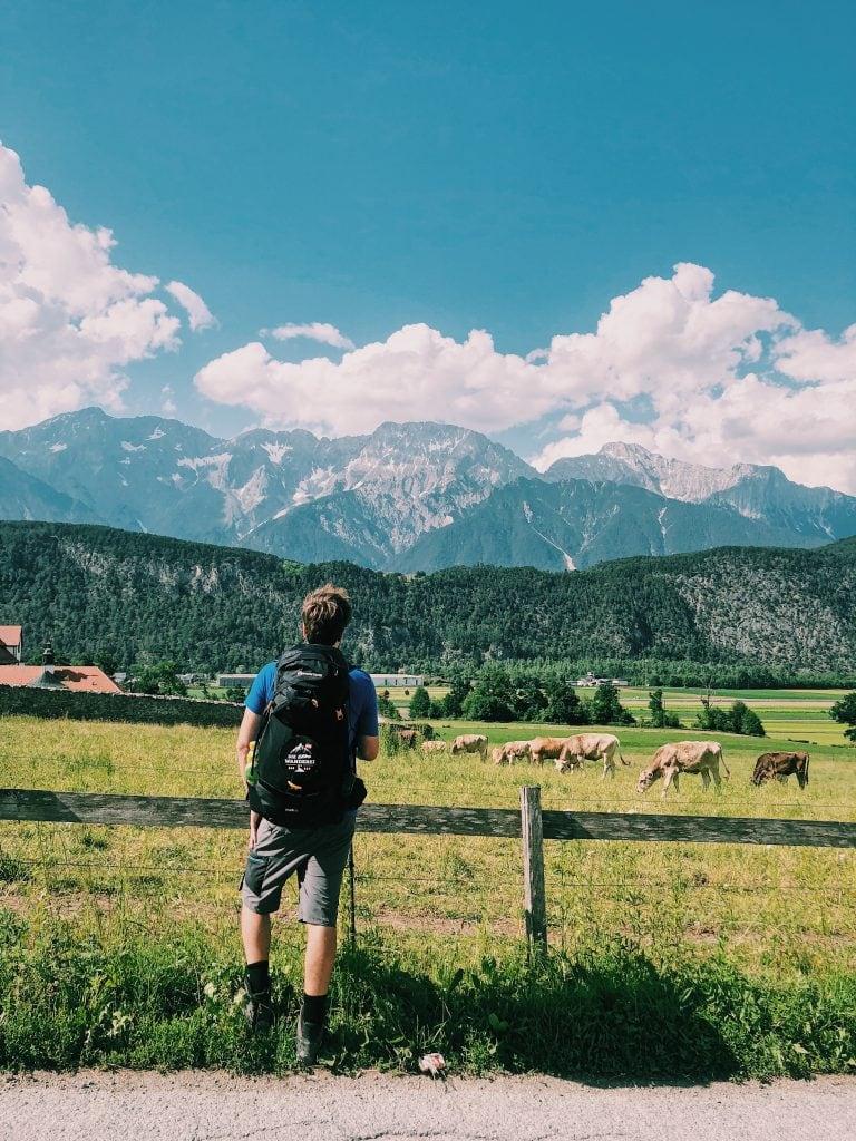 Kühe Wanderei