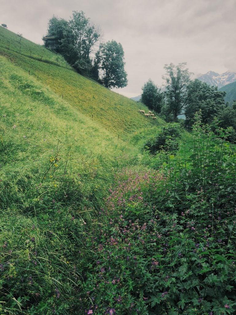 Wanderei Flirsch