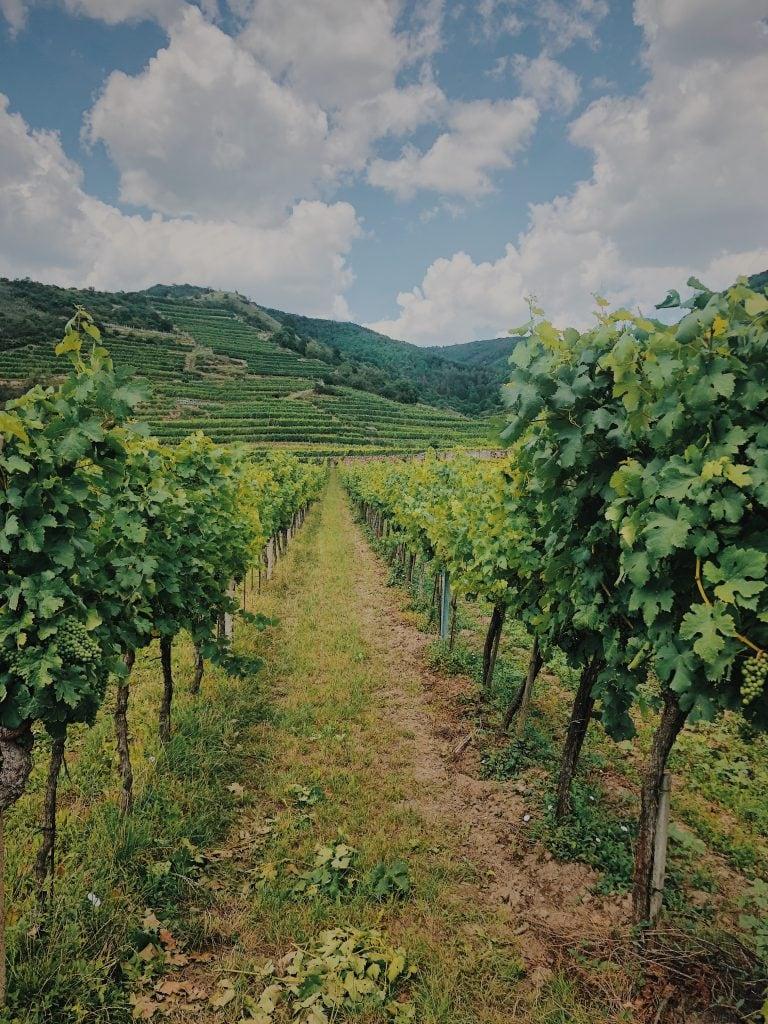 Weingarten Wanderei